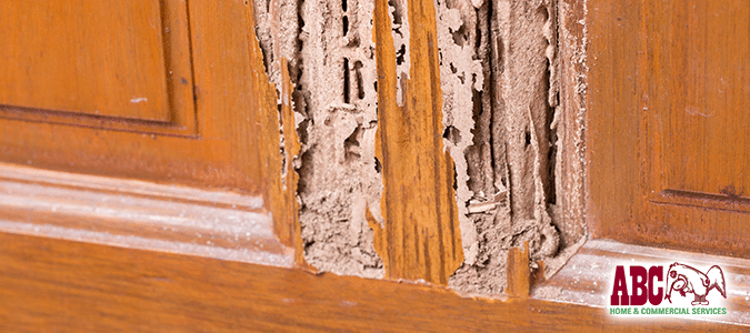 Termite damage to wooden door