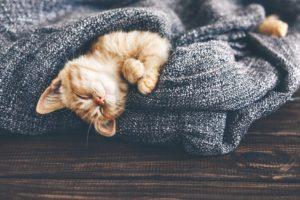 Cat Fleas and Ticks