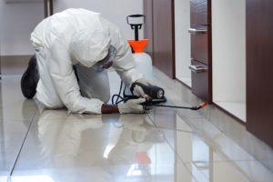 pest inspections Sydney