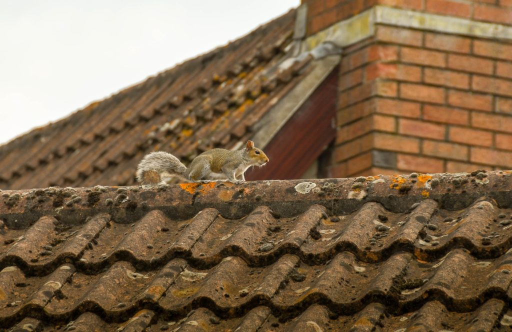 animals in roof