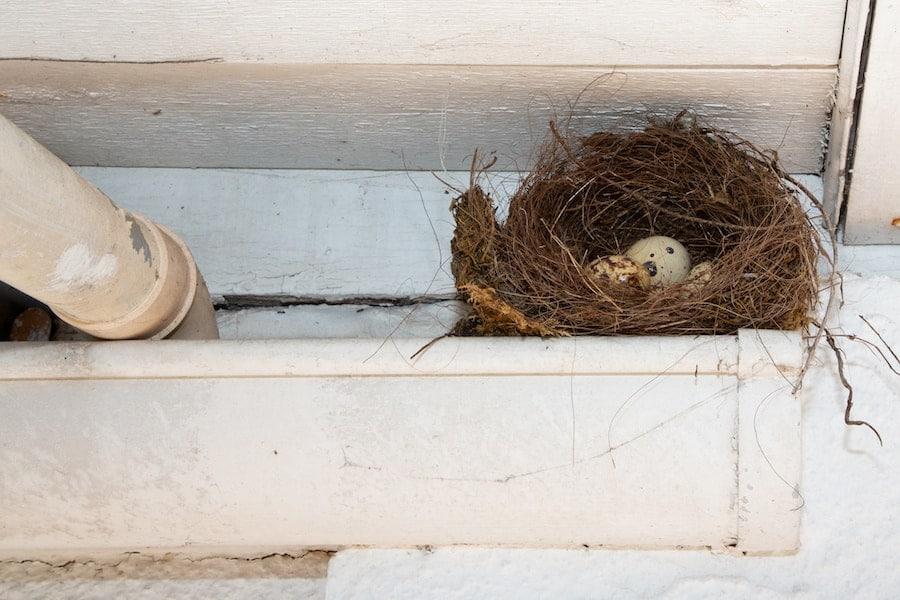 Birds Nests